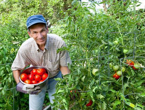 Esto es lo que necesita saber sobre los OGM.